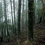 Who owns Lane County's Forests?